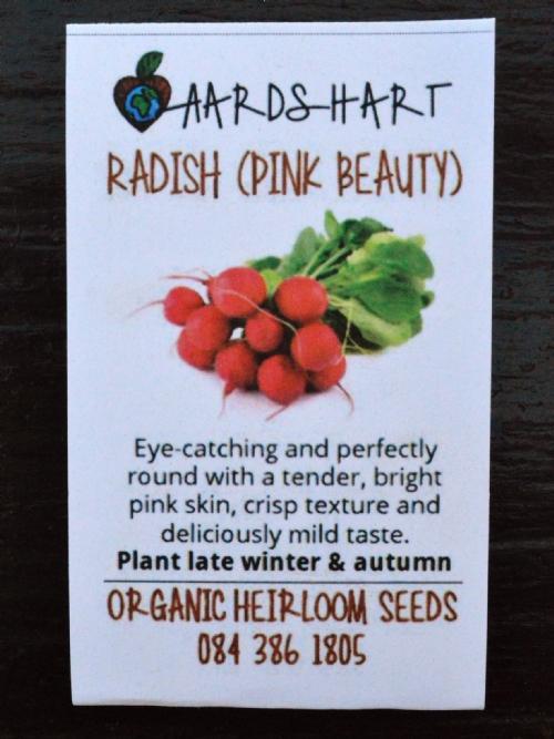 Radish (Pink Beauty)