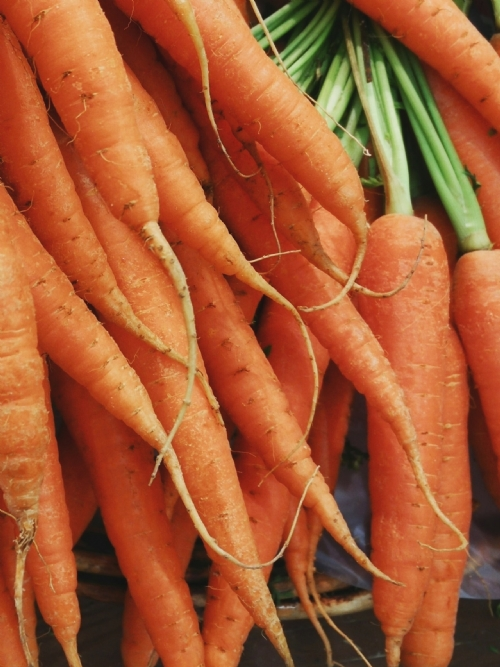 Carrots, bunch