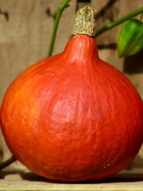 Hokkaido Pumpkin, whole