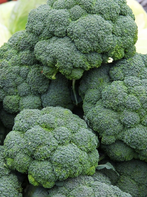 Broccoli, 8 heads