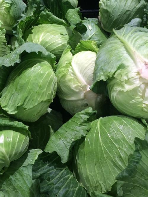 Cabbage, 15kg