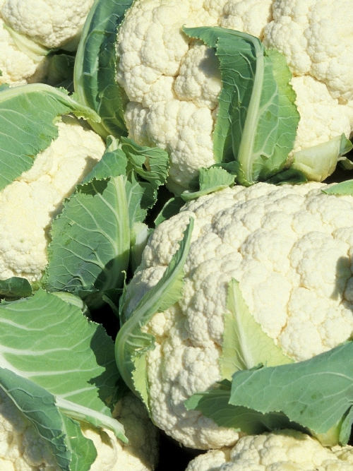 Cauliflower, 8 heads