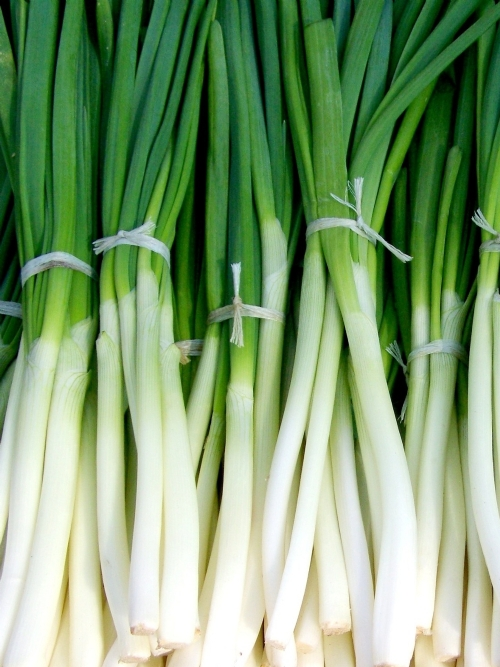Spring Onions, bunch