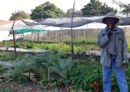 The Chartwell Veggie Patch - Kingdom Mtombeni